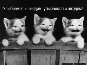 черный цвет. Обои Три котенка смеются ...
