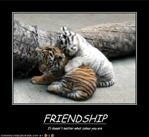 Hilarious Friendship Pictures Funny friendship quotes