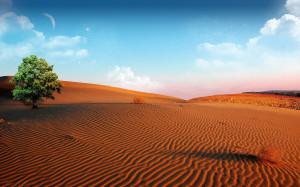 Desert Oasis Wallpaper HD