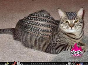 Ghetto Cat Mean Fabulous Funny Pics Gifs Videos