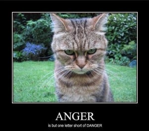 funny wednesday pictures | tags anger angry funny animals posted in ...