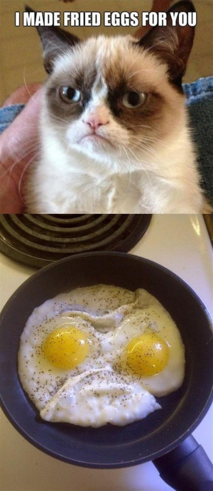 Grumpy Cat Fried Eggs Breakfast —- Best funny, pictures, humor ...