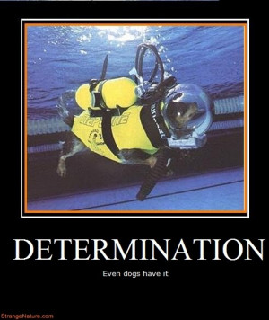 determination funny motivational animals