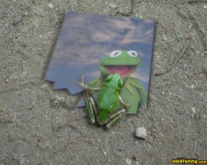 Kermit the Frog Funny Jokes