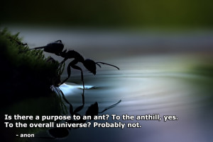 there a purpose to an ant? motivational inspirational love life quotes ...