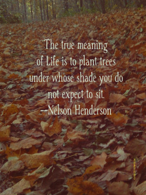 championsforchange:Great quote from Nelson Henderson