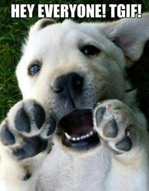 LOL #cute #dog saying #TGIF ! :) Happy Friday! -#AKC. #woof !