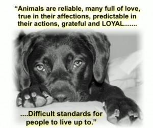 Loyal dogs