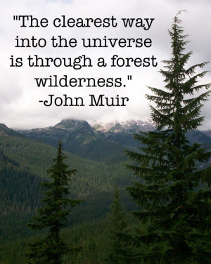 ... way into the universe is through a forest wilderness - John Muir
