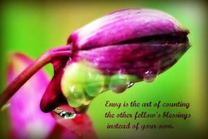 ... pictures of my blooming orchids in the garden quote from Harold Coffin