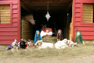 Merry Christmas » DOG-NATIVITY-SCENE-01