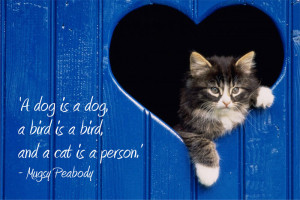 code spc16 a dog is a dog a bird is a bird and a cat is a person mugsy ...