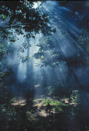 ... fashion, fog, forest, hair, light, morning, photography, pretty, trees