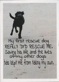 Campaigns Posters, Rescue Dogs, Helpful Veterans, Training Service ...