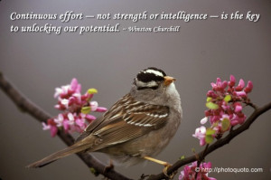 Bird quotes sayings, bird quotes and sayings