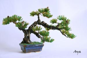Ginseng Ficus Bonsai Tree Care