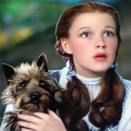 emerald+dorothy+and+toto.pl]