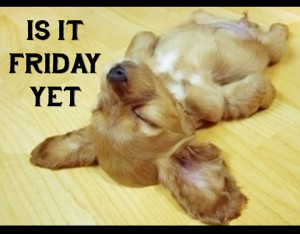 Quote ~ Puppy ~ Funny ~ Friday ~