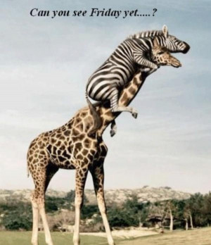It's Almost Friday, I Hope... Friends, Hump Day, Funny Animal Pictures ...