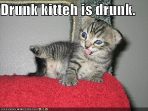 My Top Collection Funny kitten pic 3