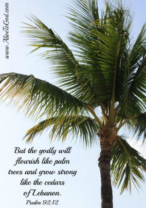 The palm tree is one of the most beautiful trees. It is associated ...