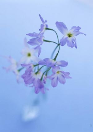 nature flowers quotes valleys iran holland macro windmills