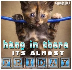 hang in there its almost friday cute kitten