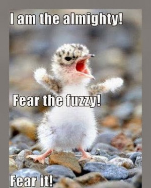 ... animals with quotes cute animal quotes for kids funny animals pictures