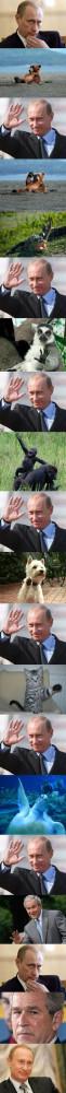funny Putin waving animals George Bush