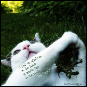 cat-wisdom-bird-in-hand-quote-cute-humor