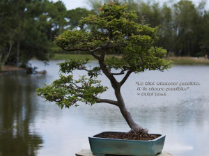 Potted Bonsai Tree And Goes Above Quote