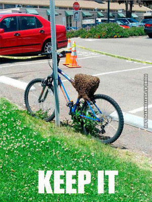 Funny Picture Bee Swarm...