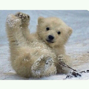 Free Quotes Pics on: Cute Polar Bear Cubs