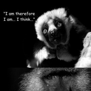 Inspirational Animal Quotes