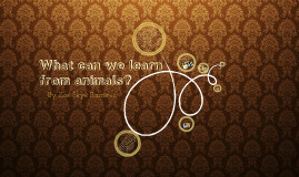What we can learn from animals