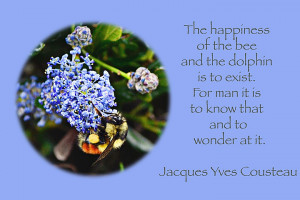 Bees, Flowers, and Quotes
