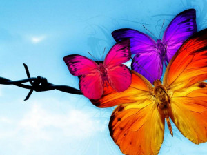 image description for colorful butterfly wallpaper colorful butterfly ...