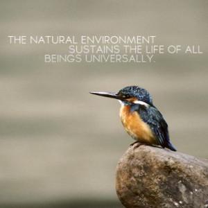 Environmental quotes, wise, sayings, deep, natural