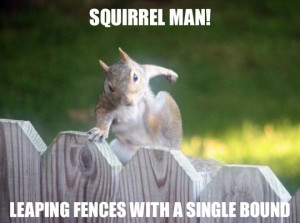 Funny quotes about squirrels quotesgram - How do you keep squirrels out of your garden ...