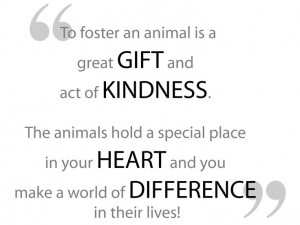 To foster an animal is a great gift and act of kindness