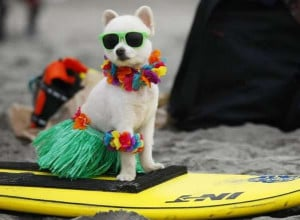 Hawaii dog - Image