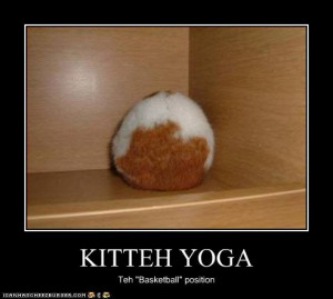 funny-pictures-cat-does-yoga