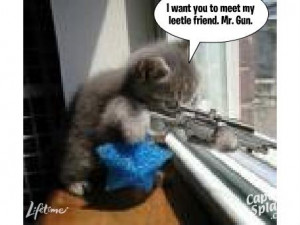 Funny cat pictures sayings   Jokes Quotes Pictures