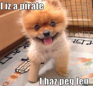 funny animals and quotes