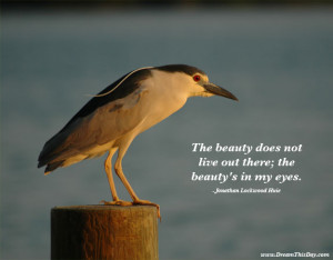 The beauty does not live out there; the beauty's in my eyes ...