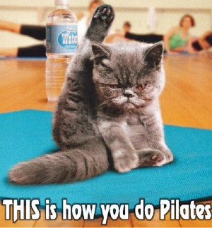 This pilates cat sure does have all the right moves, we can all maybe ...