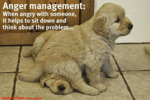 Quote About Life Anger Management w/ Puppies Sitting on Each Other # ...
