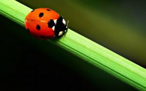 Ladybug and other Bookworms