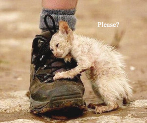 ... your home and in your heart for someone like me? Help me..... please