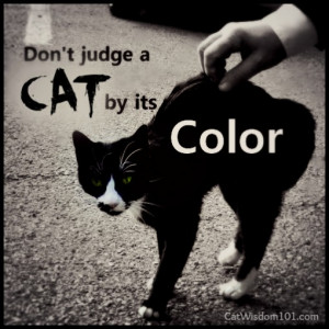 Posted in Cats , Feline Fine Art , Holidays , Photo quote de jour